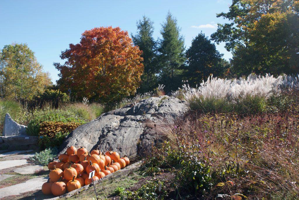 Botanical Gardens Pumpkins