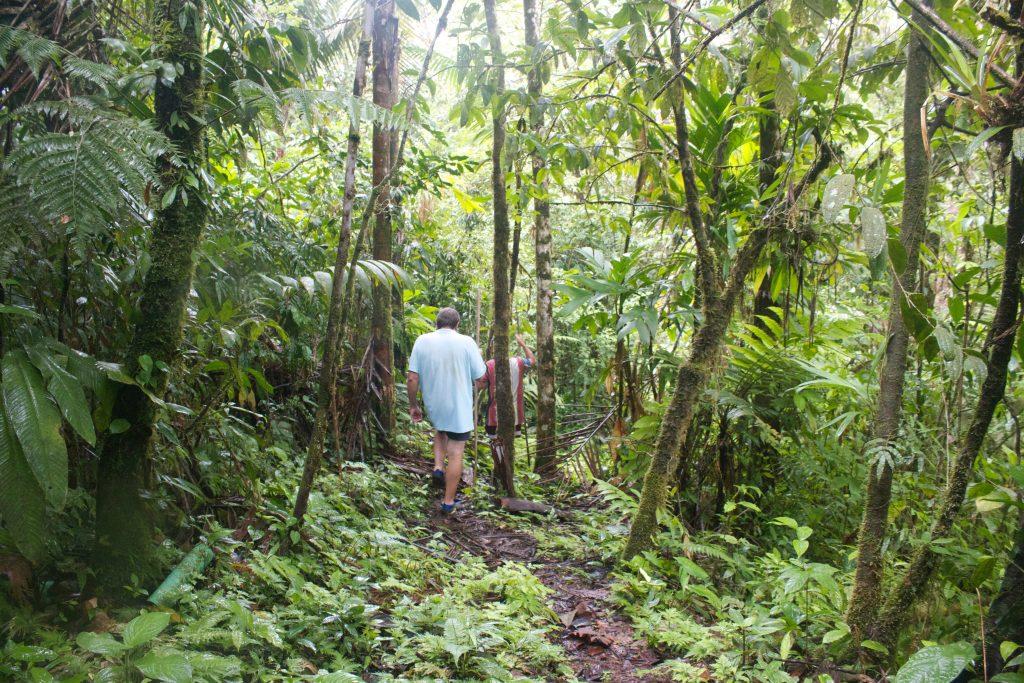 Hike in rainforest